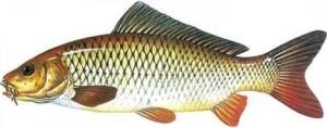 fish_12