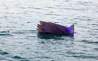 kakaya-ryba-v-okeane-plavaet-bystree-vsex