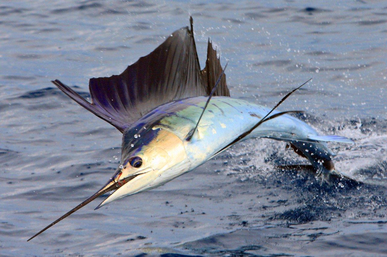 kakaya-ryba-v-okeane_plavaet-bystree-vsex