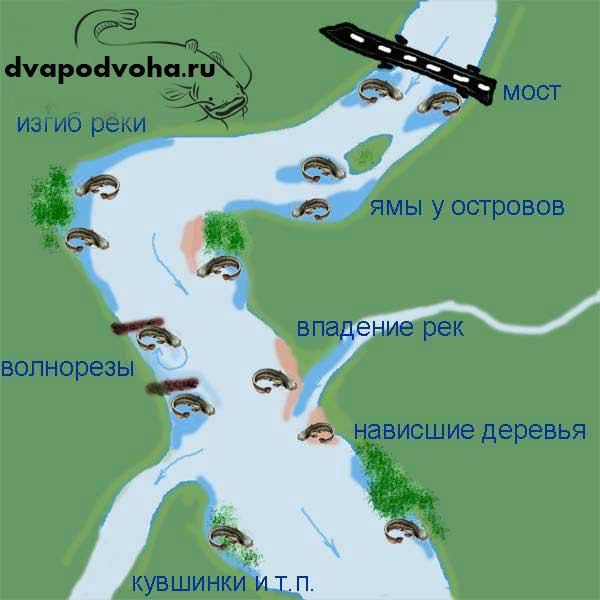 lovlya-soma-dlya-nachinayushhix-rybakov-somyatnikov