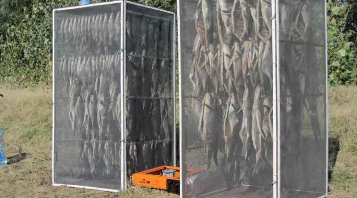 Как сушить рыбу чтобы мухи не садились