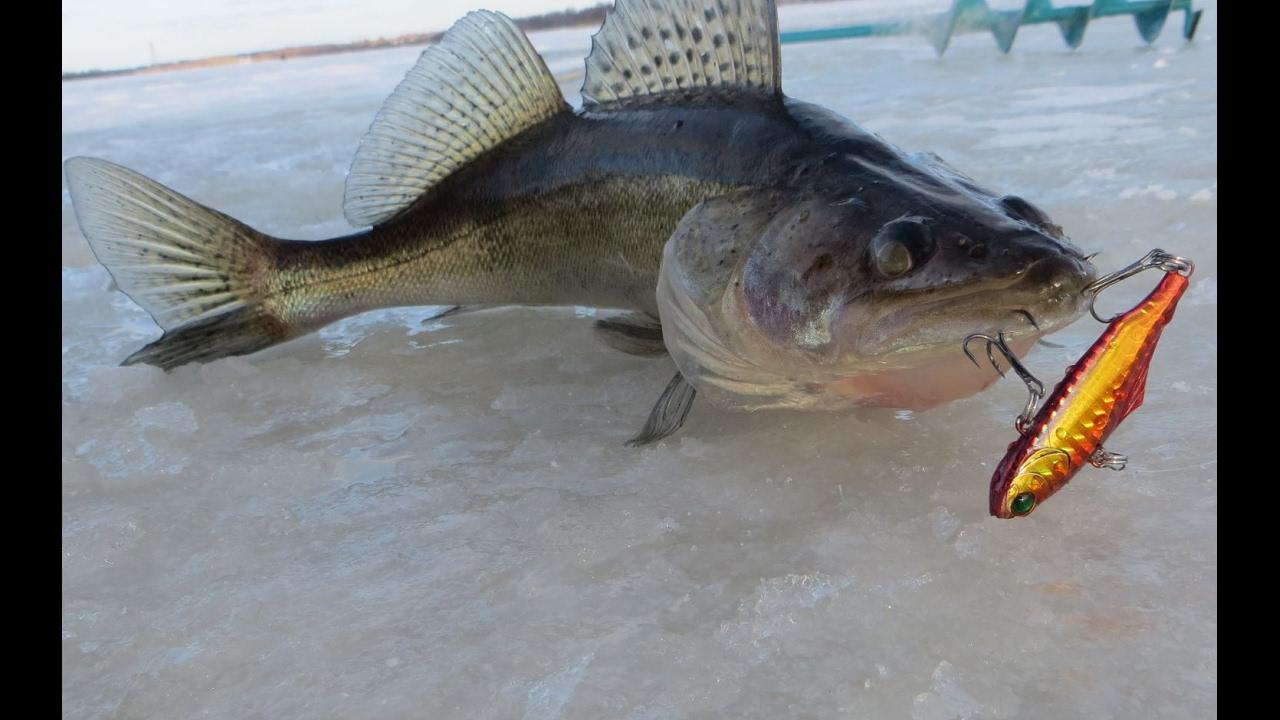 Ловля судака зимой — Рыбалка отдых для души